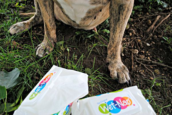 Wet-Nap Cleansing Wipes for when your dog loves to sit in the dirt