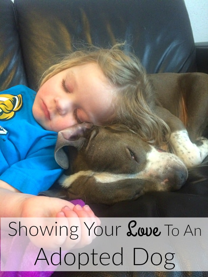 Showing Your Love To An Adopted Dog